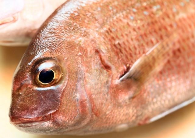 東京湾で釣り船なら「第八日の出丸」~ワラサや鯛など時期に合わせた釣りを楽しめます~